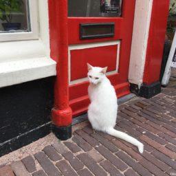 Cats of Haarlem